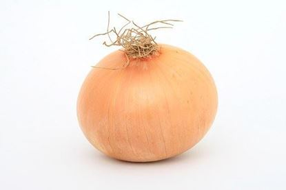 Picture of Produce: Onion, Yellow